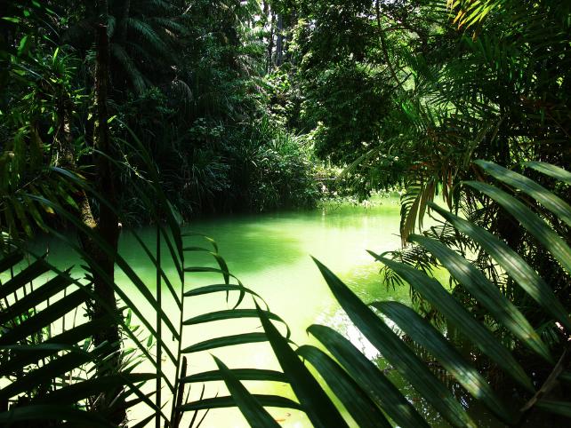 3 semaines en Malaisie / Bornéo