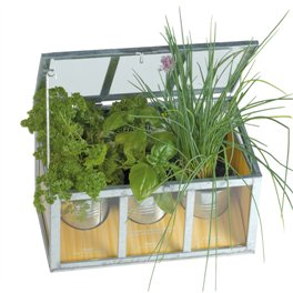 serre-chassis-plantes-aromatiques-1
