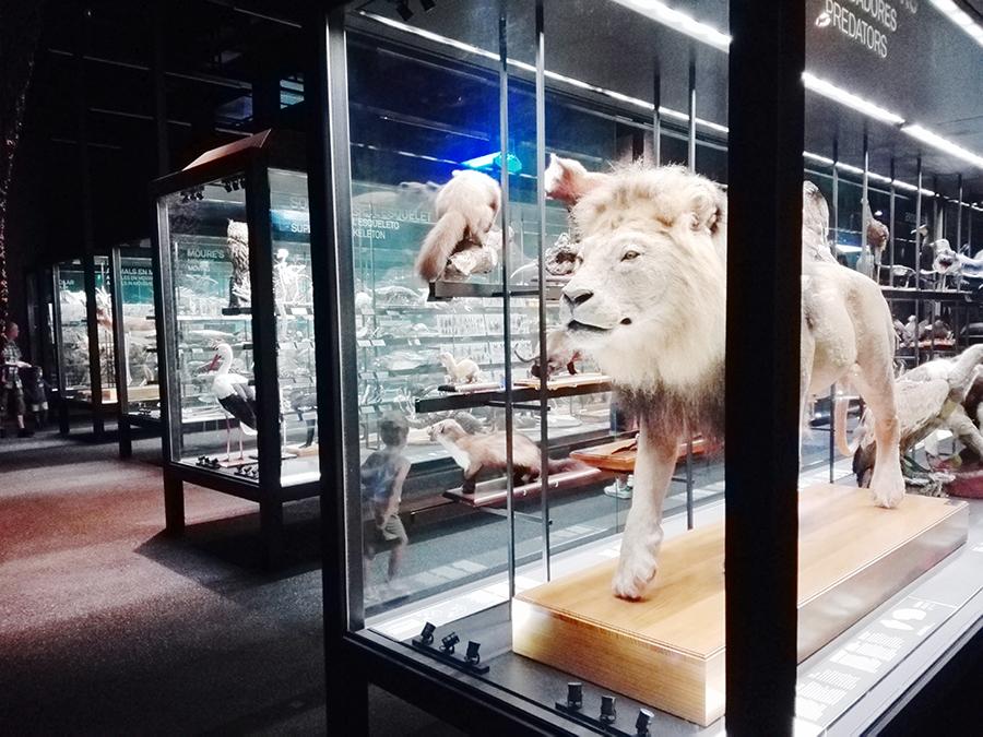 Activité à Barcelone : Le musée des sciences naturelles Blau