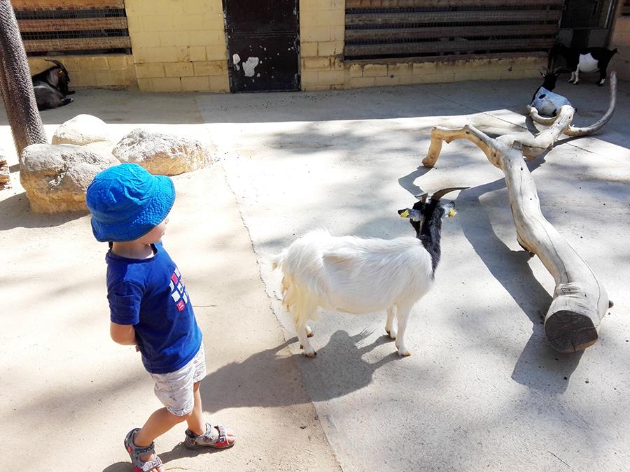 Activité à Barcelone : le zoo