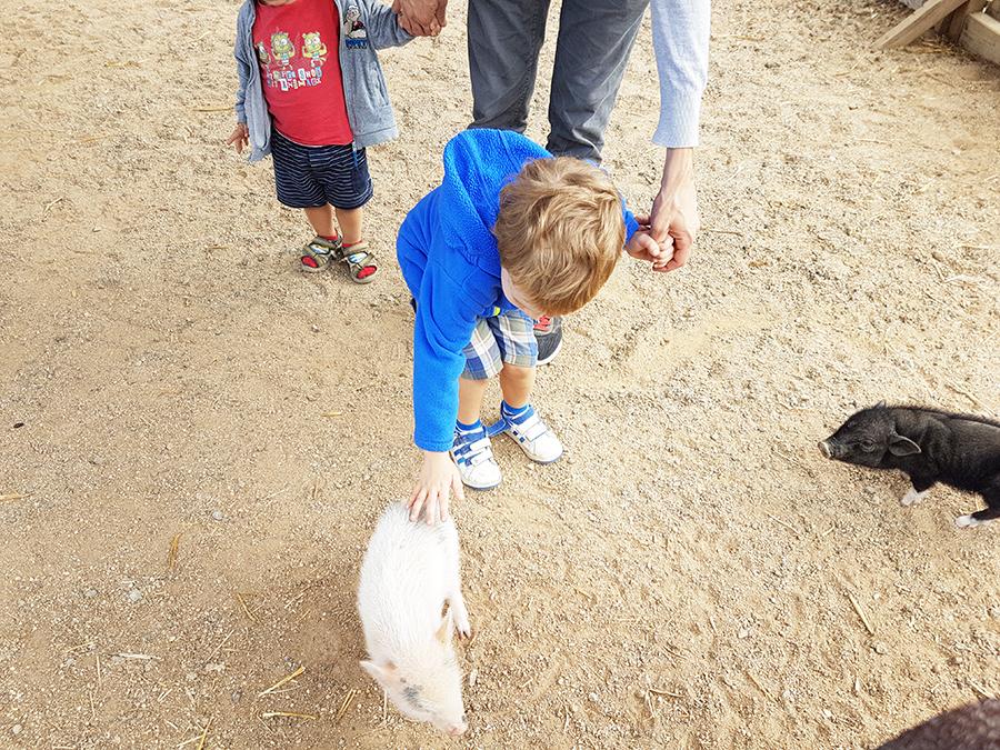 Activités près de Barcelone : La ferme de Can sala
