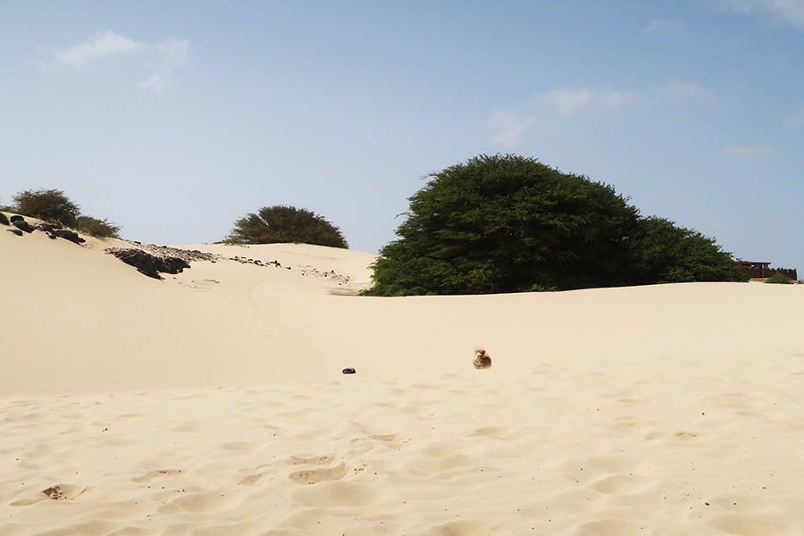 L'île de Boa Vista au Cap-Vert en famille