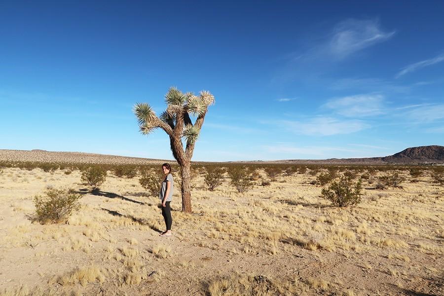 Road trip en famille dans le désert et la route 66  Road trip en famille dans le désert et la route 66  Road trip en famille dans le désert et la route 66  Road trip en famille dans le désert et la route 66  Road trip en famille dans le désert et la route 66  Road trip en famille dans le désert et la route 66  Road trip en famille dans le désert et la route 66  Road trip en famille dans le désert et la route 66  Road trip en famille dans le désert et la route 66  Road trip en famille dans le désert et la route 66  Road trip en famille dans le désert et la route 66  Road trip en famille dans le désert et la route 66  Road trip en famille dans le désert et la route 66  Road trip en famille dans le désert et la route 66  Road trip en famille dans le désert et la route 66  Road trip en famille dans le désert et la route 66  Road trip en famille dans le désert et la route 66  Road trip en famille dans le désert et la route 66  Road trip en famille dans le désert et la route 66  Road trip en famille dans le désert et la route 66