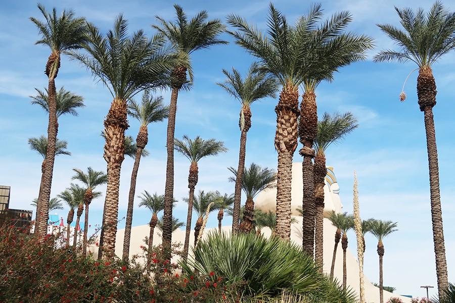 Las Vegas en famille  Las Vegas en famille  Las Vegas en famille  Las Vegas en famille  Las Vegas en famille  Las Vegas en famille  Las Vegas en famille  Las Vegas en famille  Las Vegas en famille  Las Vegas en famille  Las Vegas en famille  Las Vegas en famille  Las Vegas en famille  Las Vegas en famille  Las Vegas en famille  Las Vegas en famille  Las Vegas en famille  Las Vegas en famille  Las Vegas en famille  Las Vegas en famille  Las Vegas en famille  Las Vegas en famille  Las Vegas en famille  Las Vegas en famille  Las Vegas en famille  Las Vegas en famille