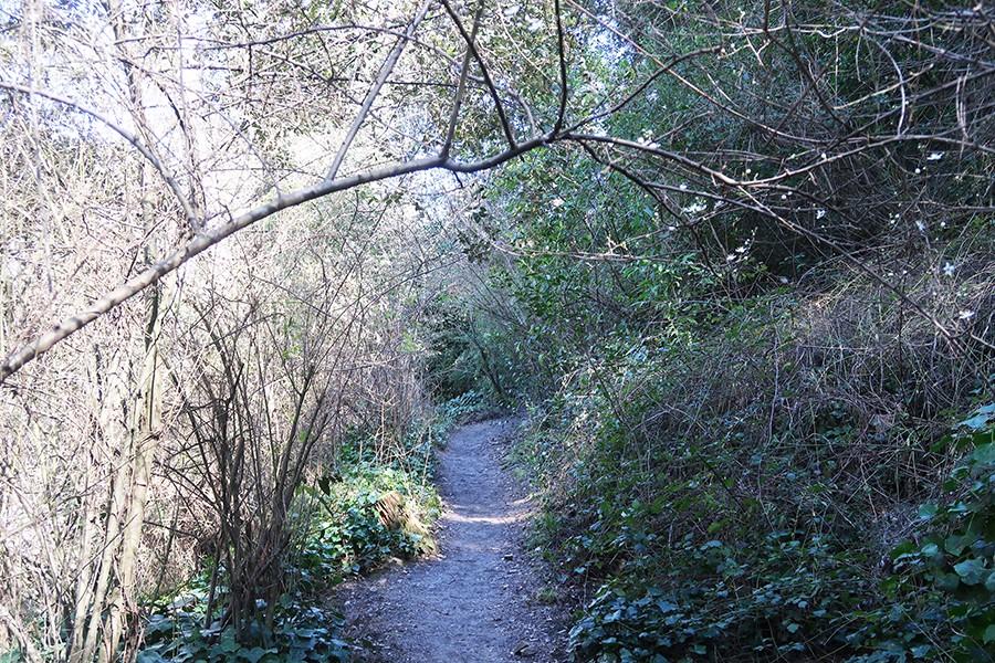Une Jolie balade en forêt