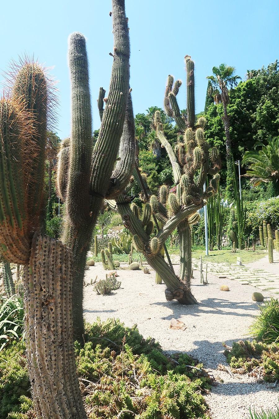 Un parc plein de cactus à Barcelone : Mossen Costs i Llobera Garden