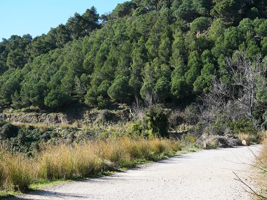 Randonnée dans les hauteurs de Barcelone : las Carretera de les Aigües
