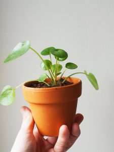 Mes  baby plantes de chez Plnts